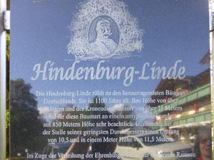 hindenburglinde2