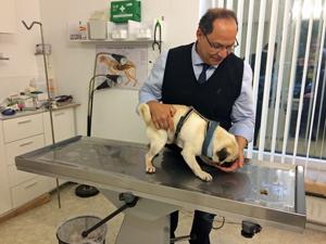 tierarzt_behandlung